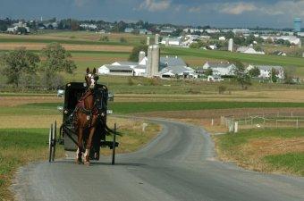 Amish_1_BuggyFarmscape